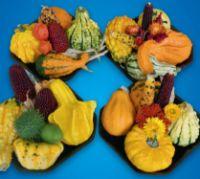 Kürbis Decor Früchte Mix