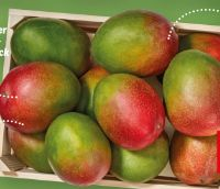 Essreife Mango