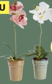 Kunstpflanze Manfred