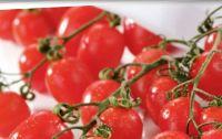 Datterini Tomaten von Spar