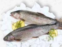 Regenbogenforelle von Fischzucht Güfel