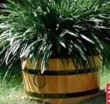 Hartholz Blumenkübel