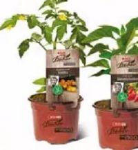 Stekovics Pflanzen von SPAR wie früher