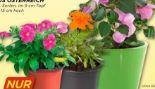 Sommerblumen Klein