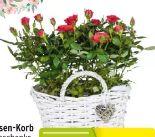Rosen-Korb