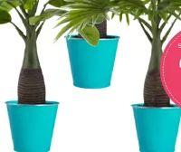 Pflanzentopf Eden