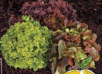 Salat Trio Mix