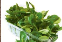 Bio-Vogerlsalat von Spar Natur pur