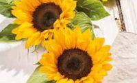 Sonnenblumen-Strauss