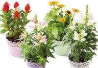 Sommerblumen Mix