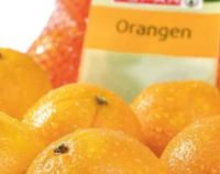 Orangen von Spar