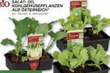 Salatpflanzen von Echt Bio