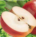 Äpfel von Echt Bio