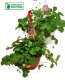 Bio-Erdbeerampel von Zurück zum Ursprung