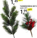 Tannenzweig Nils