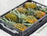 Ananas von SanLucar