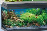 Aquarium 60 von AniOne
