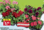 Balkonpflanzen von Piardino