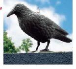 Tauben-Vogelabwehr Rabe von Gardigo