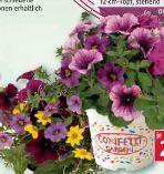 Confetti Garden Trio von Piardino