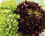 Bio Mix Salat von Natürlich für uns