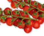 Cherrytomaten von Ich bin Österreich