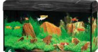 Aquarien-Set Scout von Gute Wahl