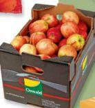Äpfel Gala von Oswald