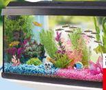 Aquarium-Starter-Set von AniOne