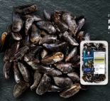 Frische Miesmuscheln von Fischerstolz