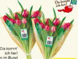 Tulpen von Da komm' ich her