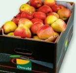 Apfel Breaburn von Oswald
