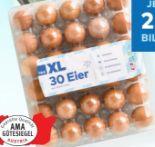 XL Eier von T&G