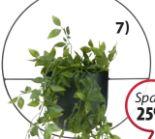 Pflanzenhänger Rickard