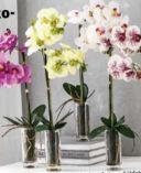 Deko-Orchidee von Bella Casa