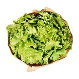 Bio-Salat Batavia von ja!natürlich