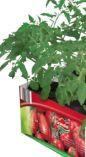 Tomatenmix von Grandiol