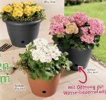 Blumentopf Flora von Powertec Garden