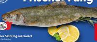 Saibling von Holzinger Fisch