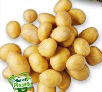 Bio Speisefrühkartoffeln