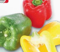 Paprika Tricolore von LGV